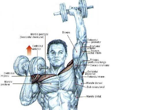 Culturism - Bodybuilding